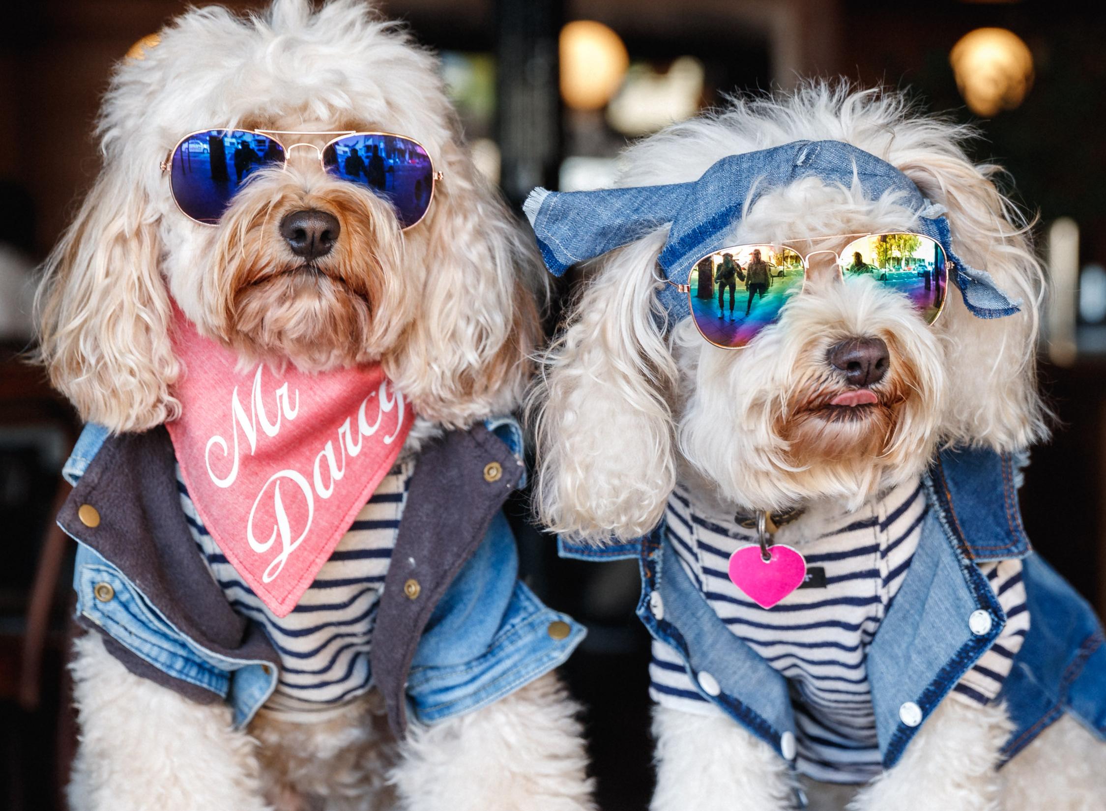 Paddo Inn Doggy Day
