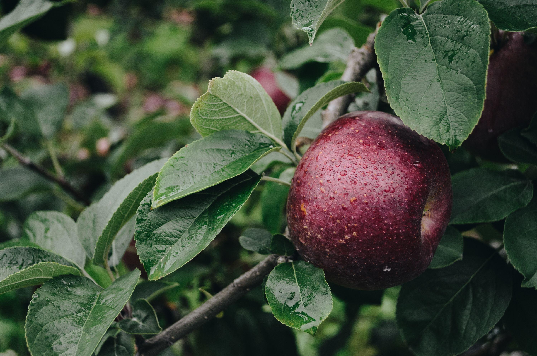 Paradis des Fruits
