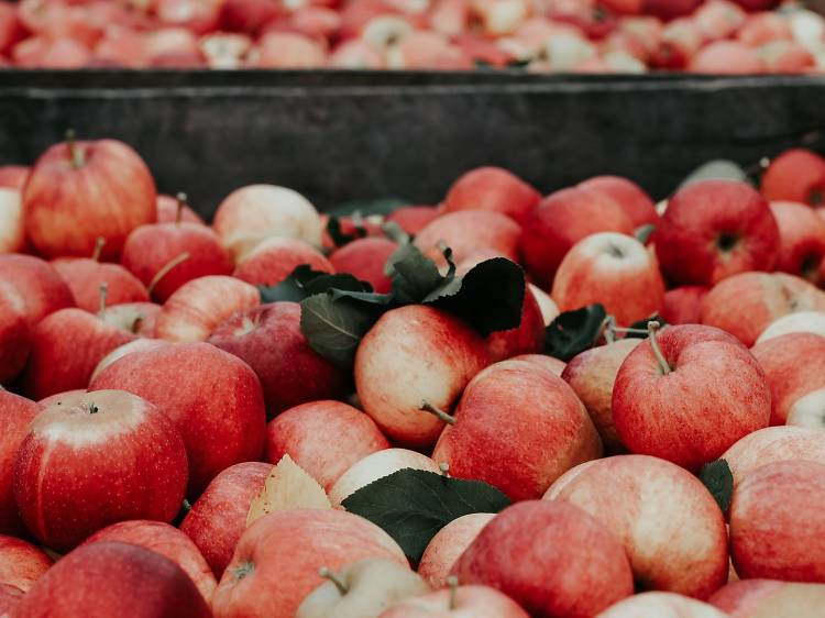 Verger Au Cœur de la Pomme