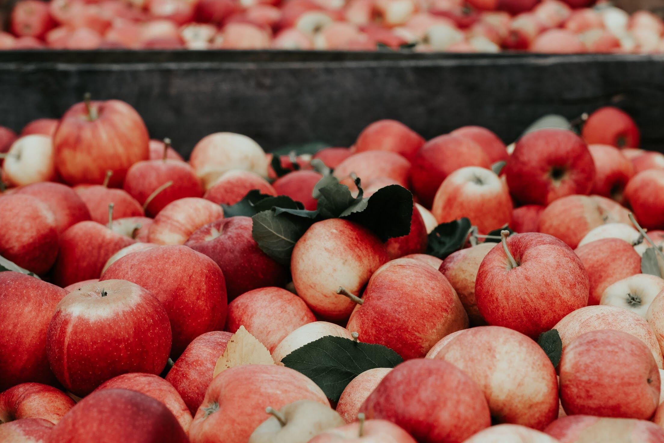 Verger Au Coeur de la Pomme