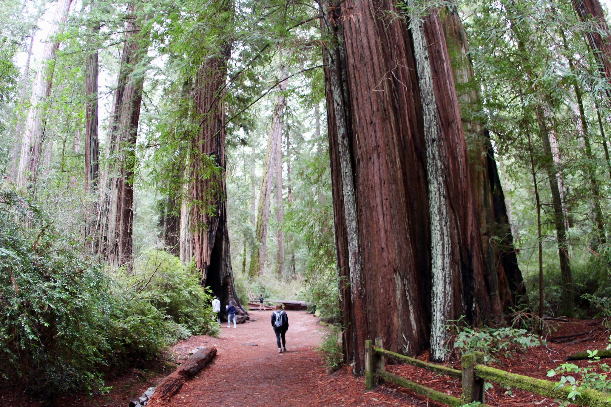 Big Basin Redwoods State Park, California