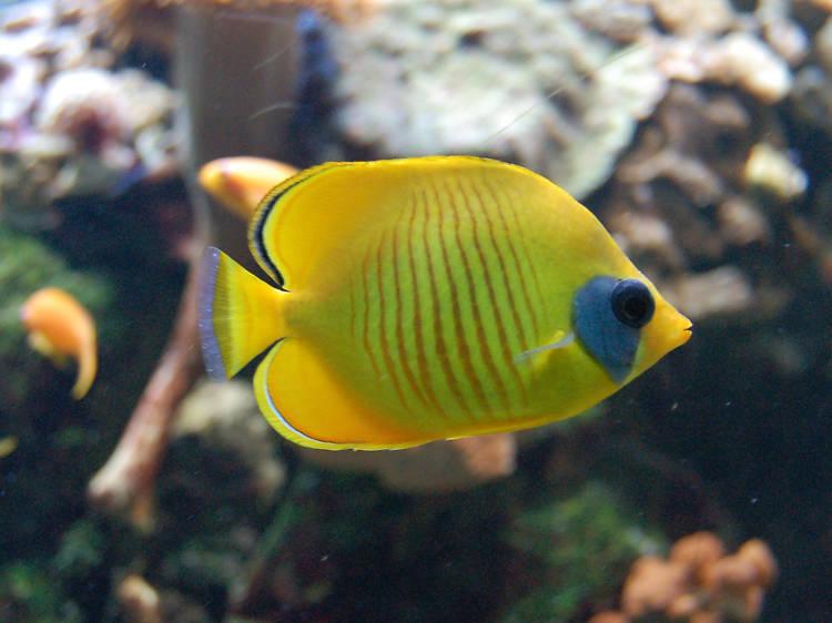 Palais de la Porte Dorée Aquarium Tropical