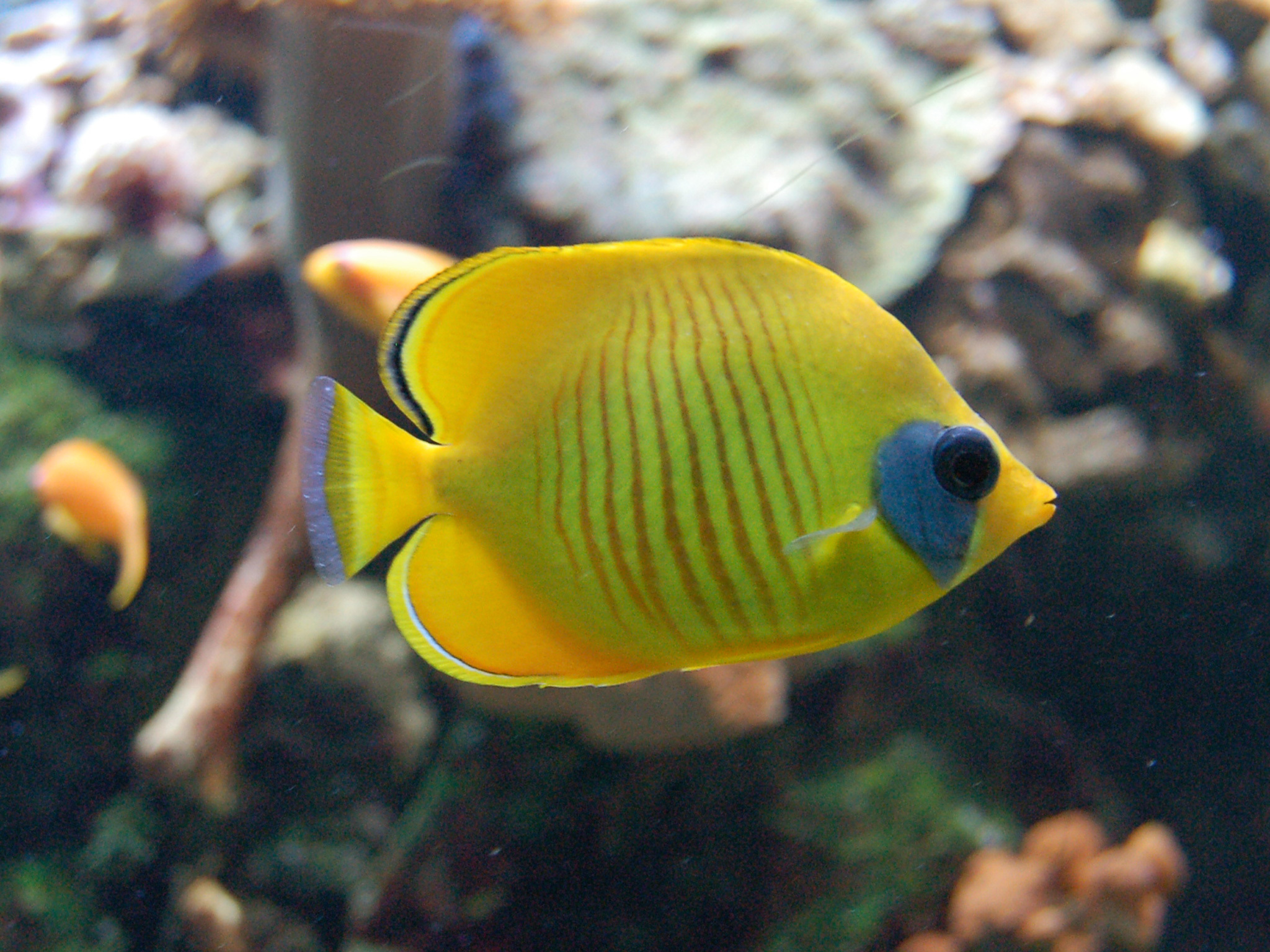 A fish at the Palais de la Porte Dorée aquarium