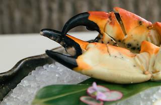 Novikov stone crab