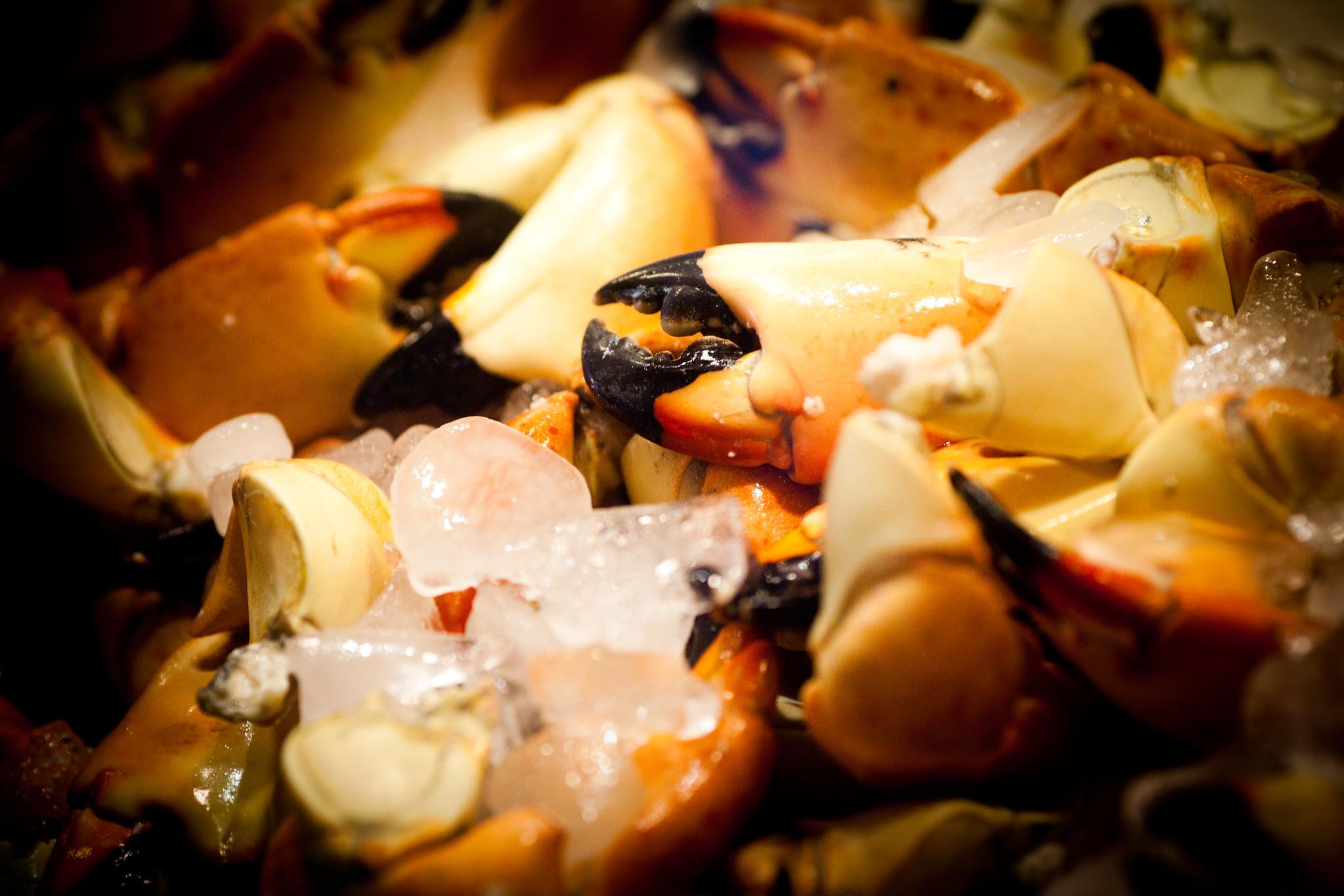 Stone Crabs, Flikr