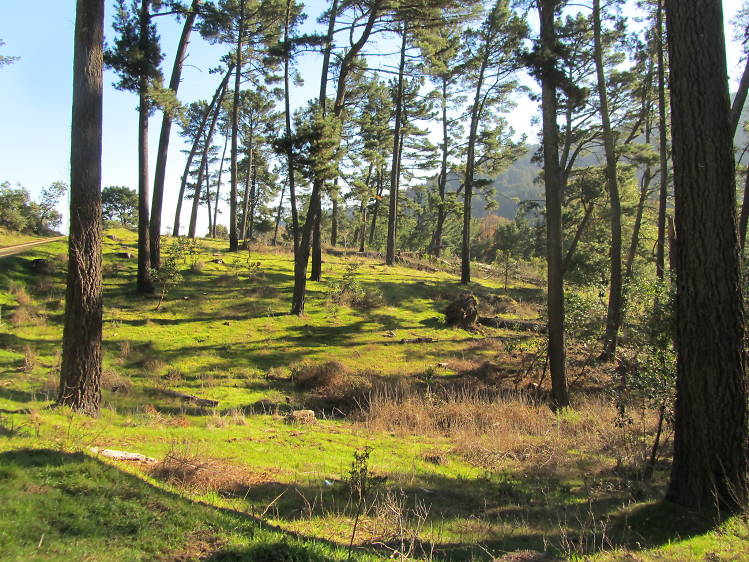 Go for a hike in Redwood Regional Park