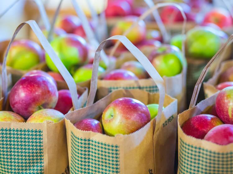 Where to go apple picking near Boston