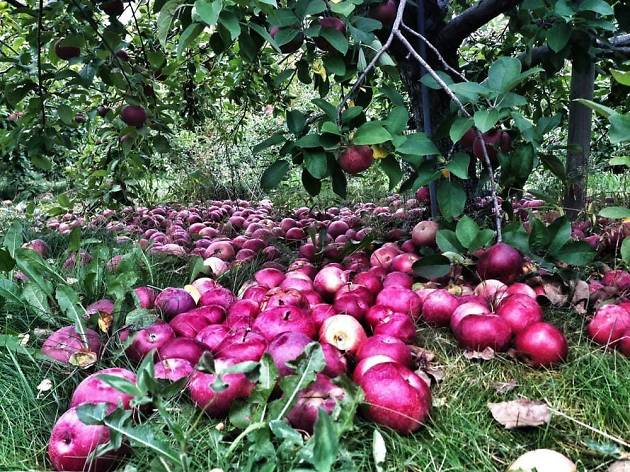 Carlson Orchards