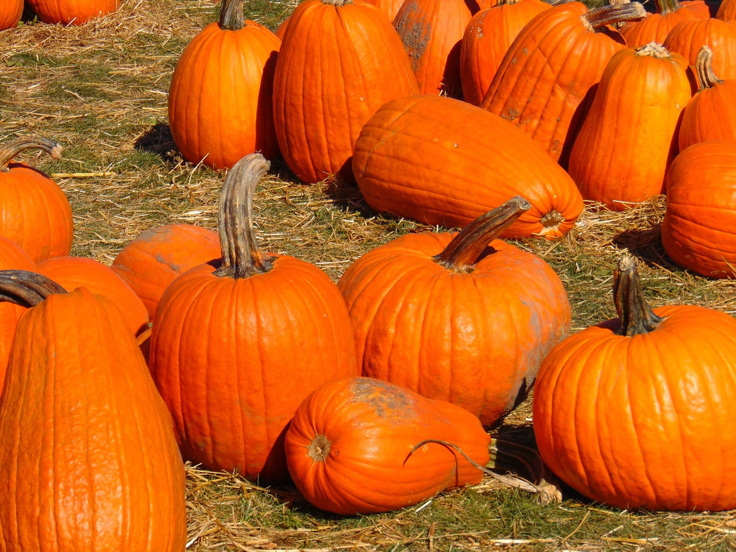 The best pumpkin patches near the Hub
