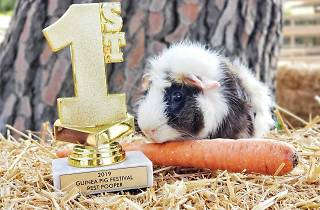 Los Angeles Guinea Pig Rescue