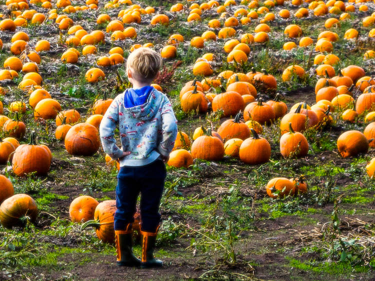 The best spots for pumpkin picking NY families love