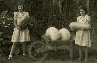 Squash and Pumpkin Festival