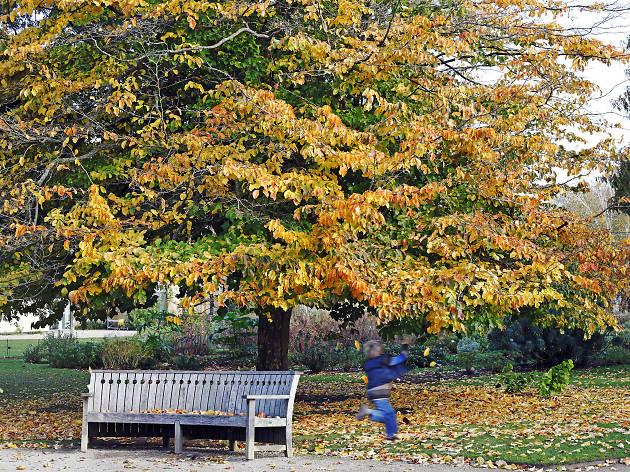 Autumn at Oxford Botanic gardens