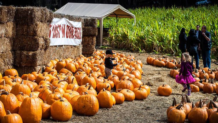 Arata's Pumpkin Farm