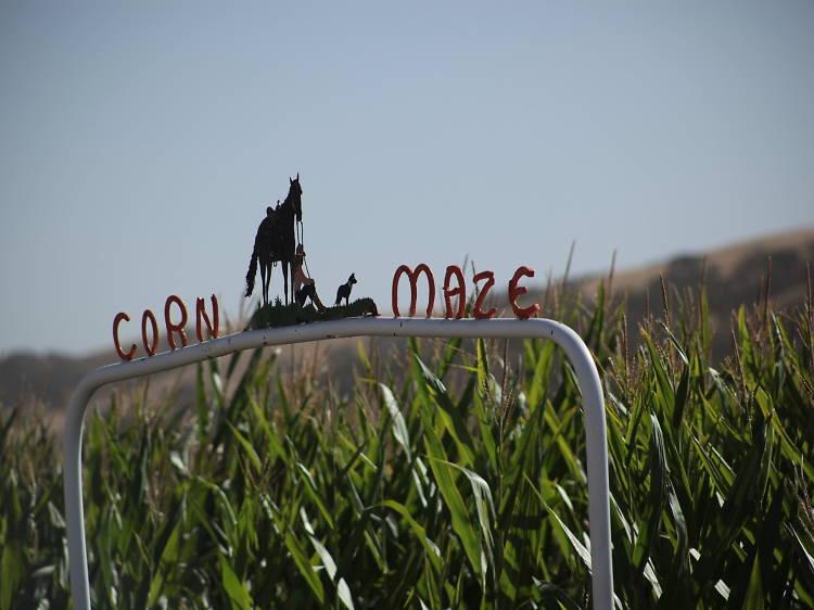 10 super fun corn mazes in the Bay Area this fall
