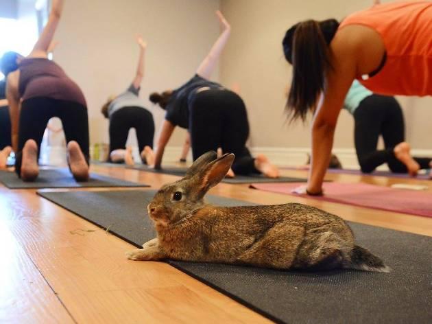 Centered Studio Bunny Yoga