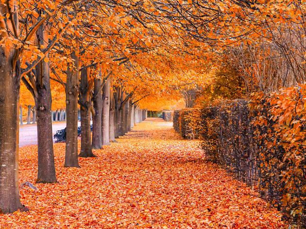 Autumn leaves in Regent's Park