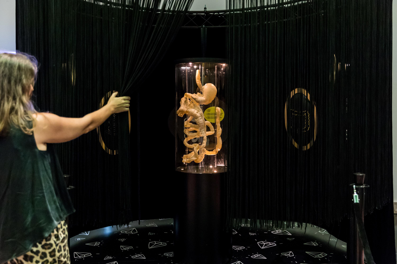 A jóia da coroa de Pum! A Vida Secreta dos Intestinos, é este intestino real, tirado de um corpo humano