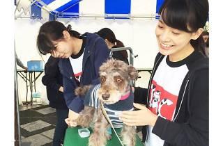 駒沢わんこ祭り