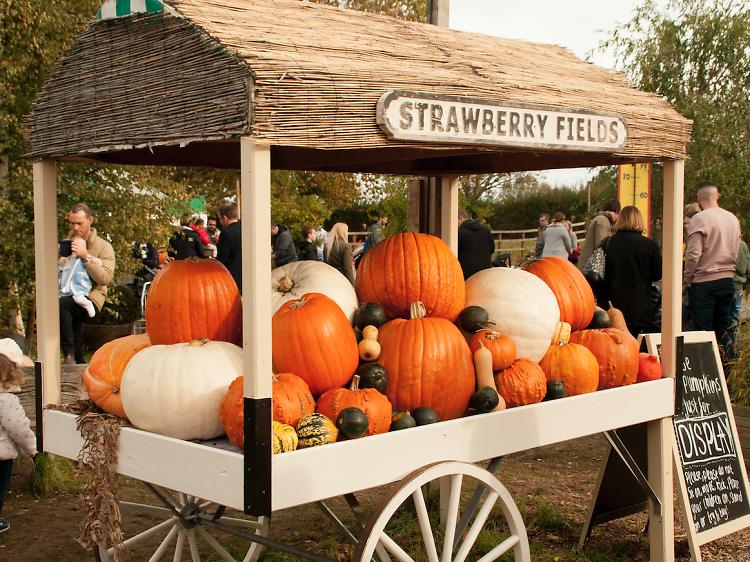 Where to go pumpkin picking near London this Halloween