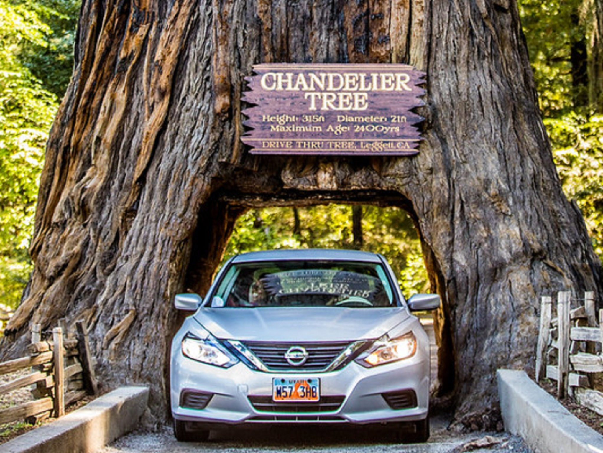 A car driving through a giant redwood trunk