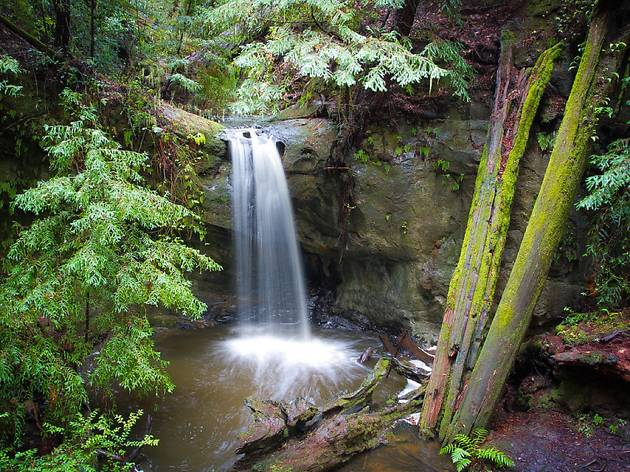 A waterfall in a forest cove