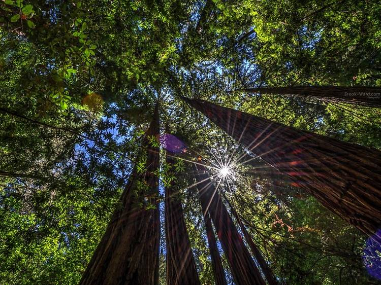 13 best places to see California redwoods