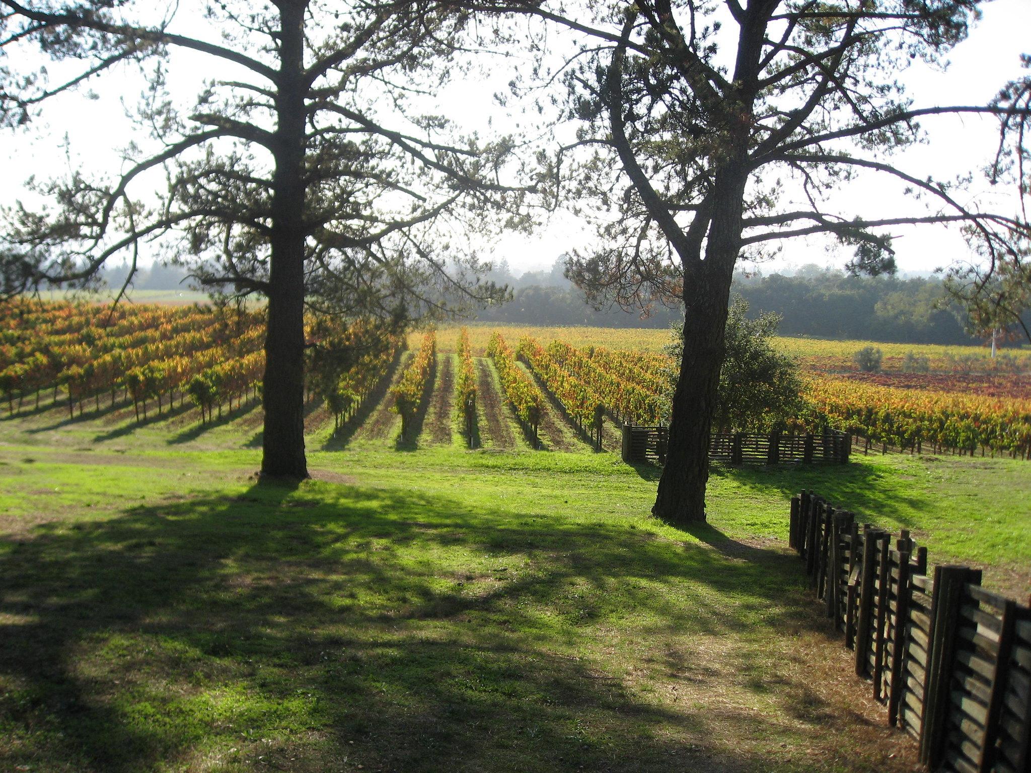 Gundlach-Bundschu Winery