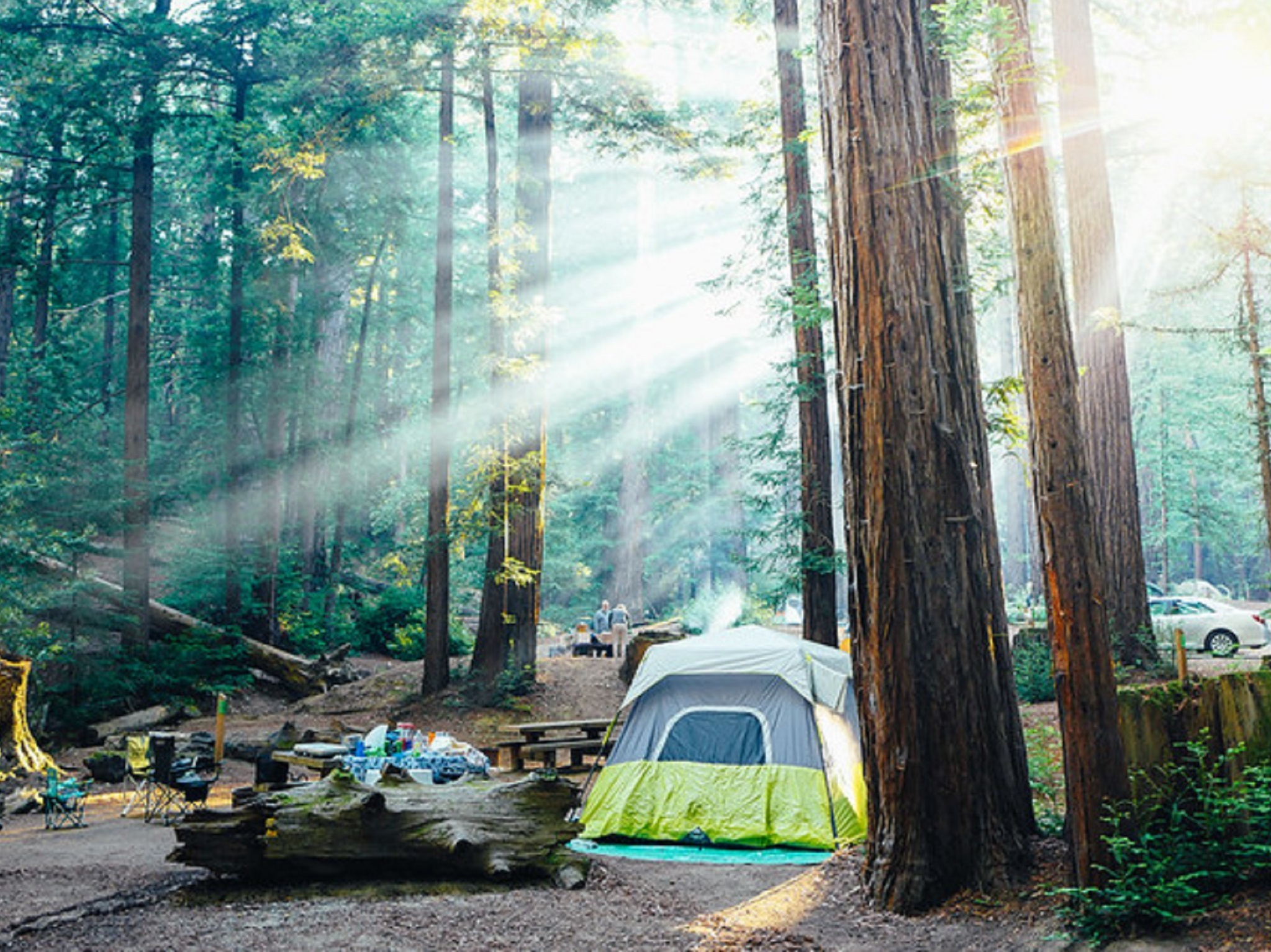 A yellow and grey tent among the redwoods