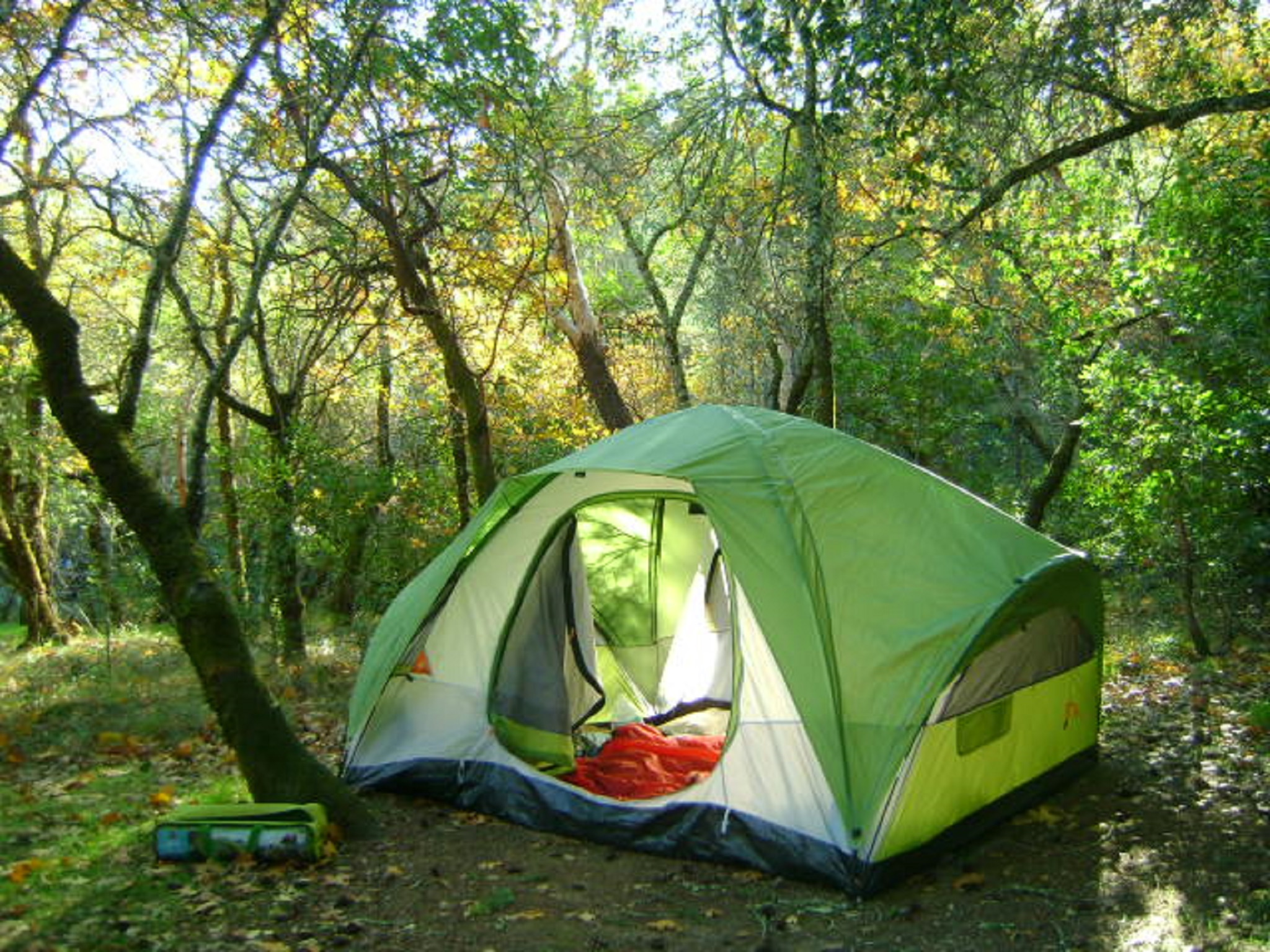 A green tent among trees