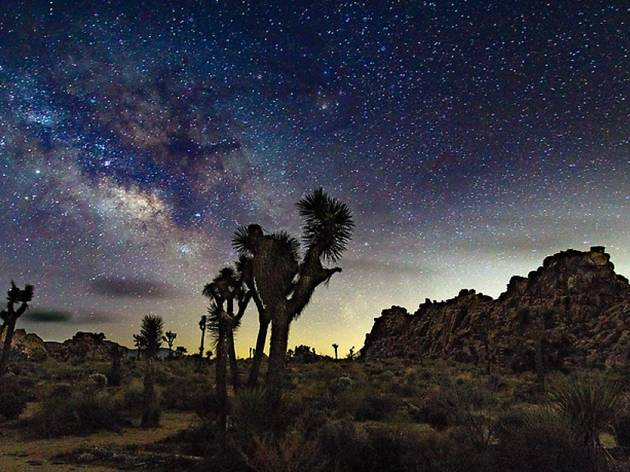 Joshua trees under a starry night sky