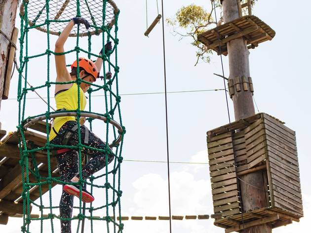 Person on high ropes course at Trees Adventure