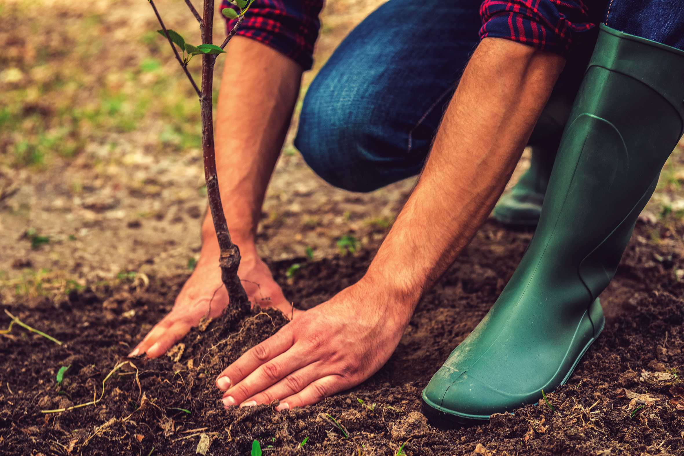 City Hall is giving away 55,000 free trees