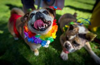 The Village Festival dogs