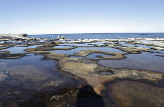 Rock platform Potter Point Boat Harbour Aquatic Reserve, Kurnell Peninsula.