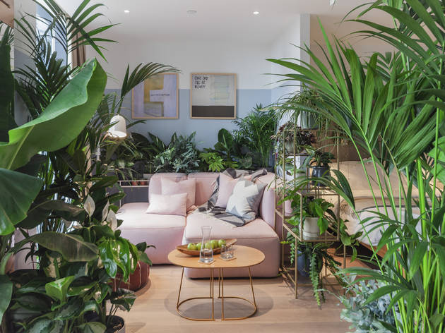 Thejoyofplants.co.uk reveal the UK's first JUNGLE SUITES at Leman Locke Hotel – bookable from 19th October