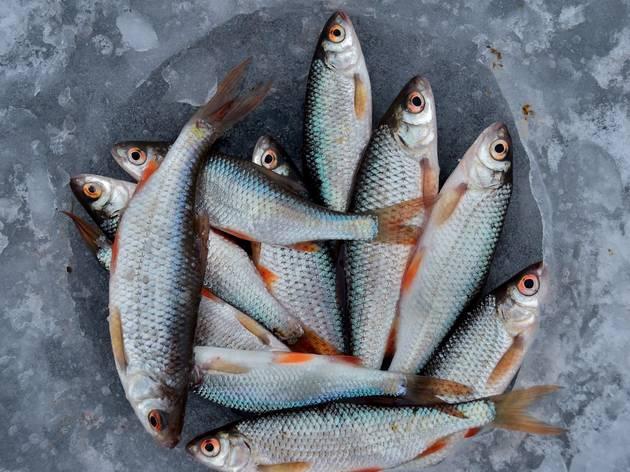 Peixe e Marisco