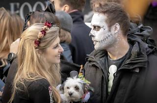 All Dogs Matter Halloween Dog Walk