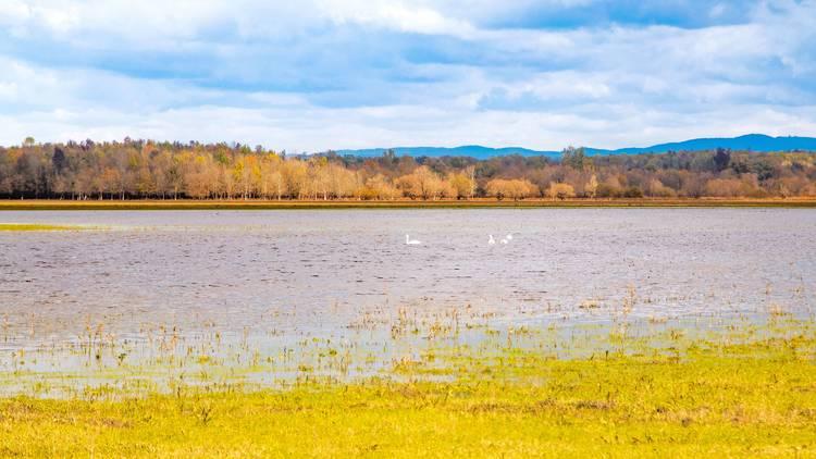 Nature park Lonjsko polje