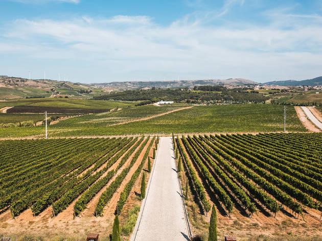 Vinhos de Lisboa: uma região para descobrir (até pelos lisboetas)