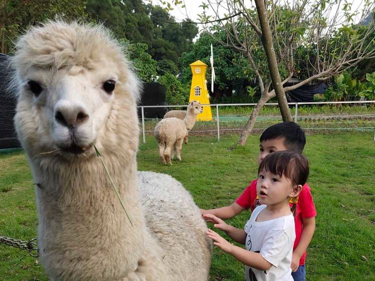 6 best local farms to visit in Hong Kong