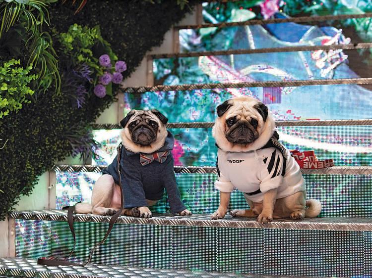 Uma Lisboa Dog Week