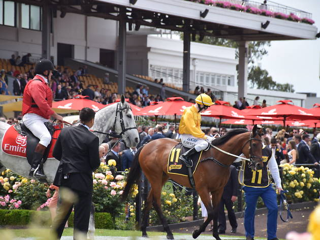 People riding horses at Melbourne Cup 2015
