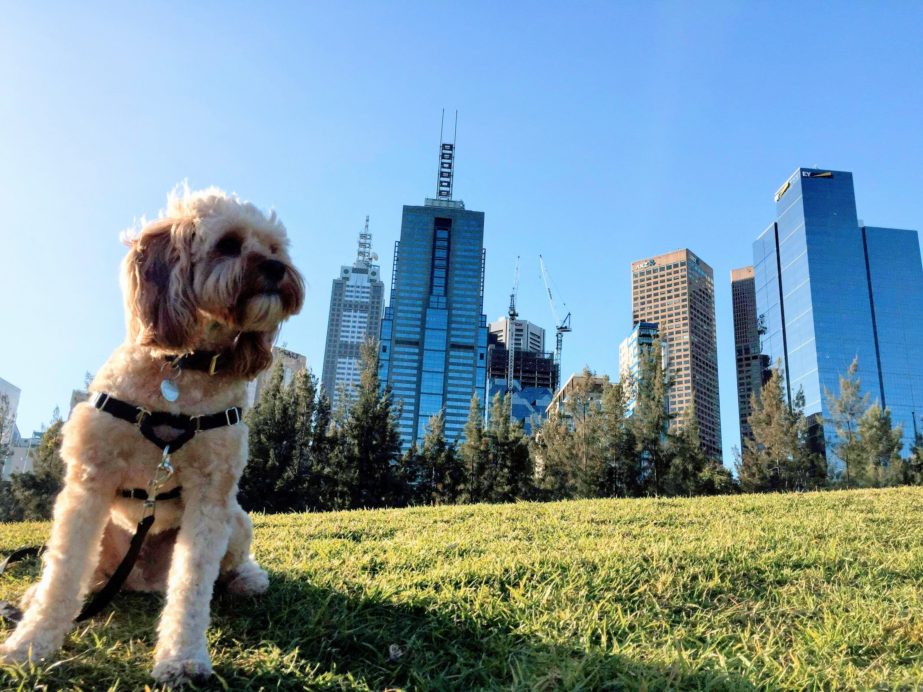 Win a weekend in the city with your best fur friend