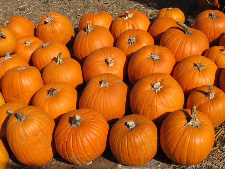 Clancy's Pumpkin Patch