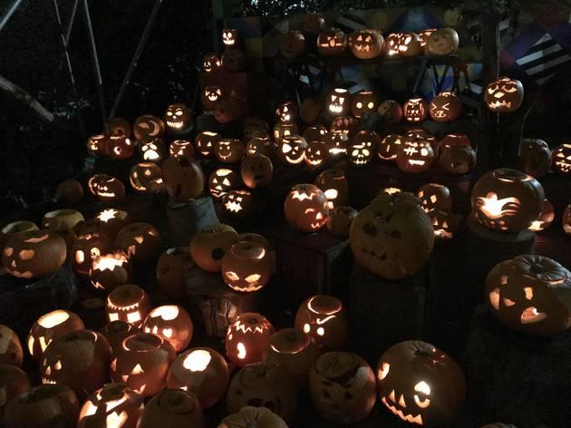 Pumpkins at Dalston Curve Garden