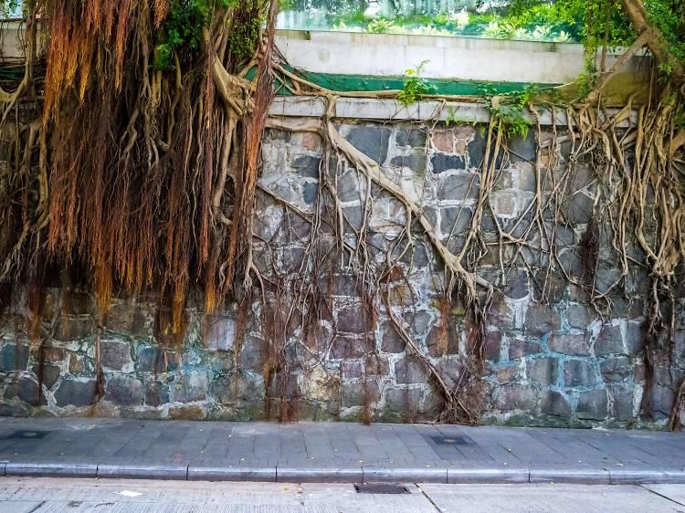 Stone wall trees