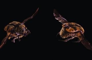 (Foto: Capsicum annuum. Chile piquin o amashlto, Silvia Andrade/Cortesía del museo)