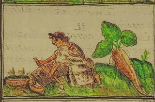 (Foto: De las yerbas medicinales, Fray Bernardino Sahágun/Cortesía del museo)
