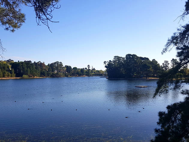 Lake surrounded by bushland